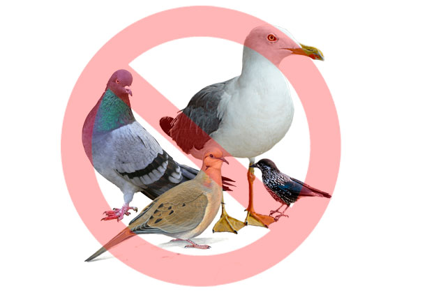 eliminar aves malaga